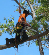 Tree Lopping Insurance